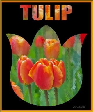 Tulip Love By Lorianna Hespe