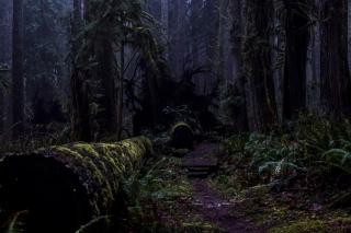 A Dusky Path