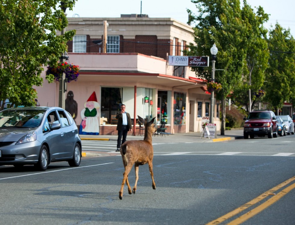 Deer on Commercial Ave.