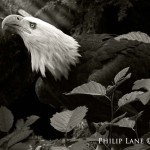 Phil Lane Nature Photography